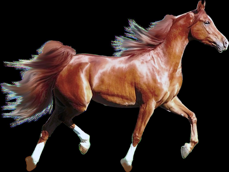 нашим прозрачные картинки лошадей более красивого визуального