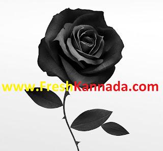 Black Rose kannada movie songs