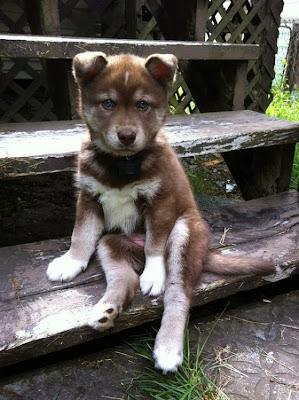 fotografias de perros: tierna perrito sentado en escalera