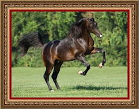 лошадиный полёт в  небо