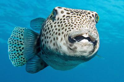 Τα μυστικά των ψαριών