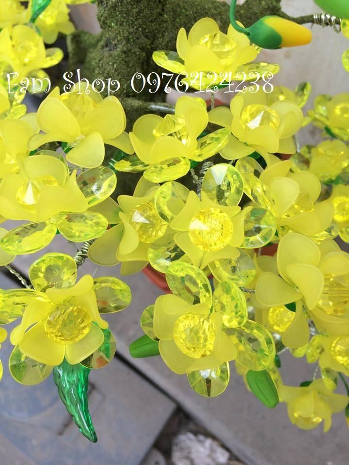 Canh hoa mai lam goc bonsai mai dao tai Chua Lang