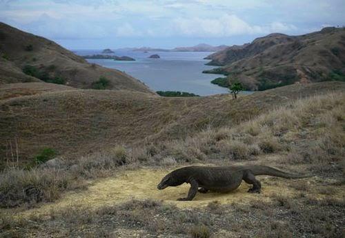Taman Nasional Komodo Indonesia