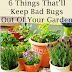 6 Things To Keep Bad Bugs Out Of Your Garden