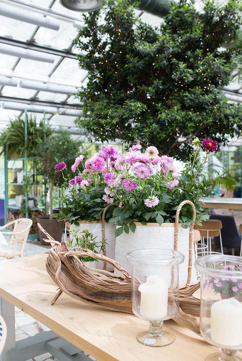 invernadero-peñotes-comedor-plantas-flores-decoracion