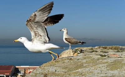 Environnement ~ A Alger, le