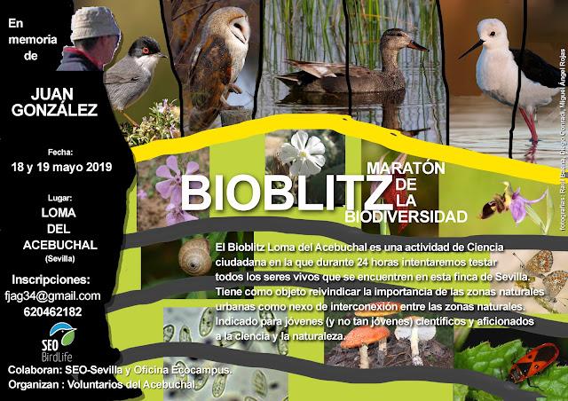 Bioblitz, maratón de la biodiversidad. En memoria de Juan González, 18-19 de Mayo 2019. Grupo Local SEO-Sevilla.