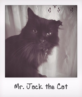 Mr. Jack the Cat