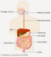 contoh struktur organisasi tingkat sistem organ