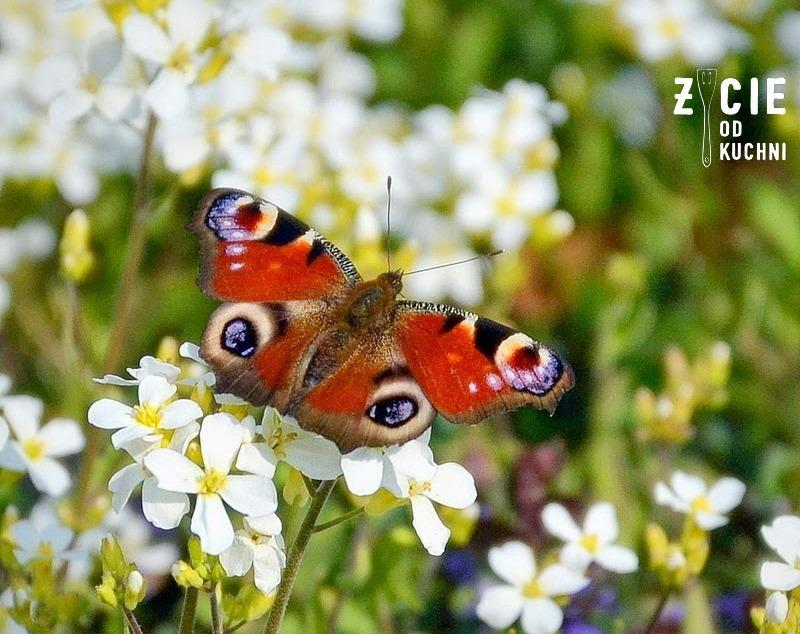motyl, motyl na kwiatach, zycie od kuchni, paz krolowej, rozkwitaj na wiosne, wiosna, piekna na wiosne, jarmuz, ananas, maslanka,otreby, kiwi, zielony, koktajl, smoothie, kosmetyki, makijaż,