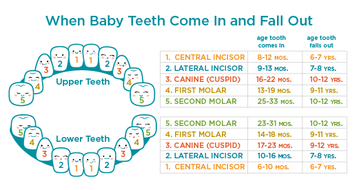 Up until the age of or your child will have both permanent and baby teeth leading to typical mismatched smile this also woollahra dental when come in fall out rh wollahradentalspot