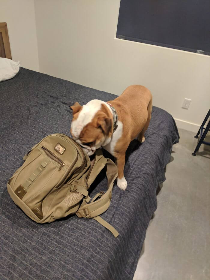 30 Times People Found The Best Airbnb Companion In Adorable Pets
