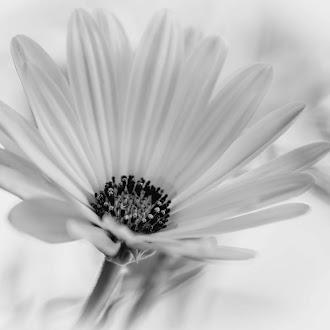Flores de mi cosecha