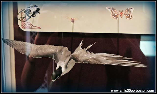 Museo Nacional del Aire y el Espacio de Estados Unidos: Aves