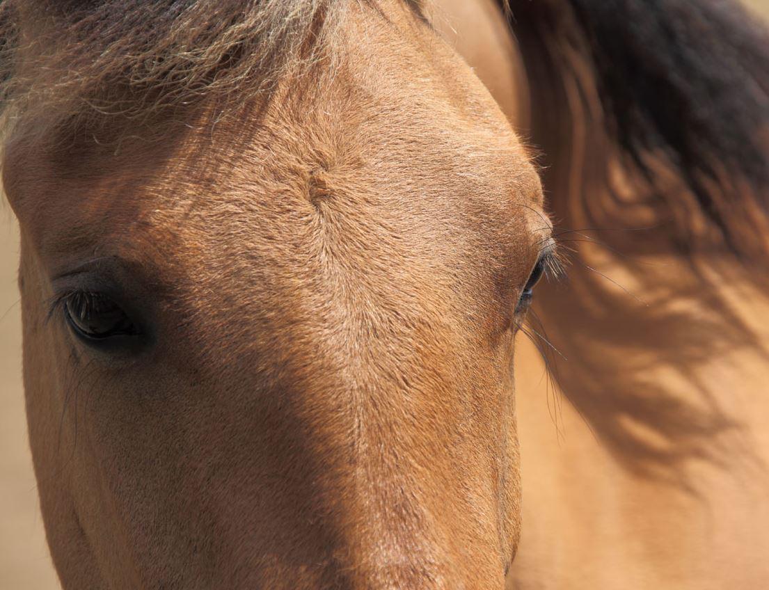 Kuvablogi: Hevosen katse