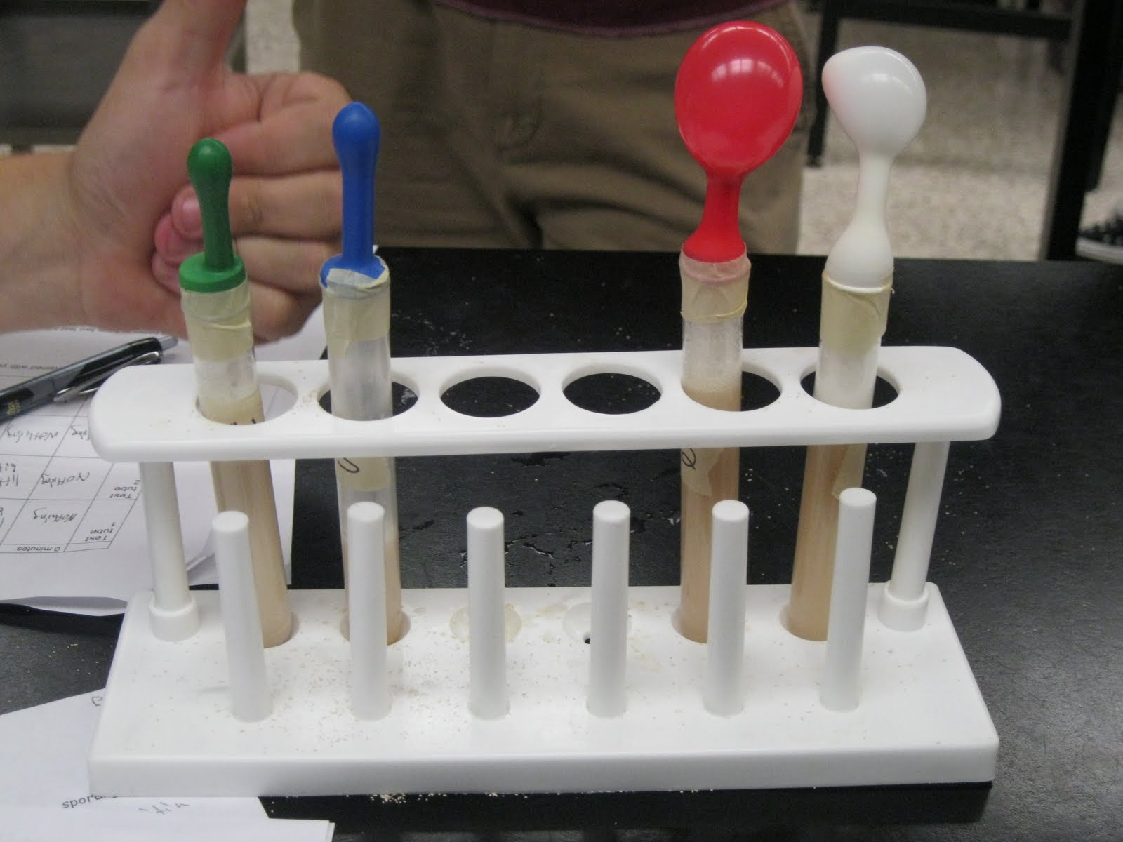 Mrs Lawson S Biology Class Yeast Fermentation Lab
