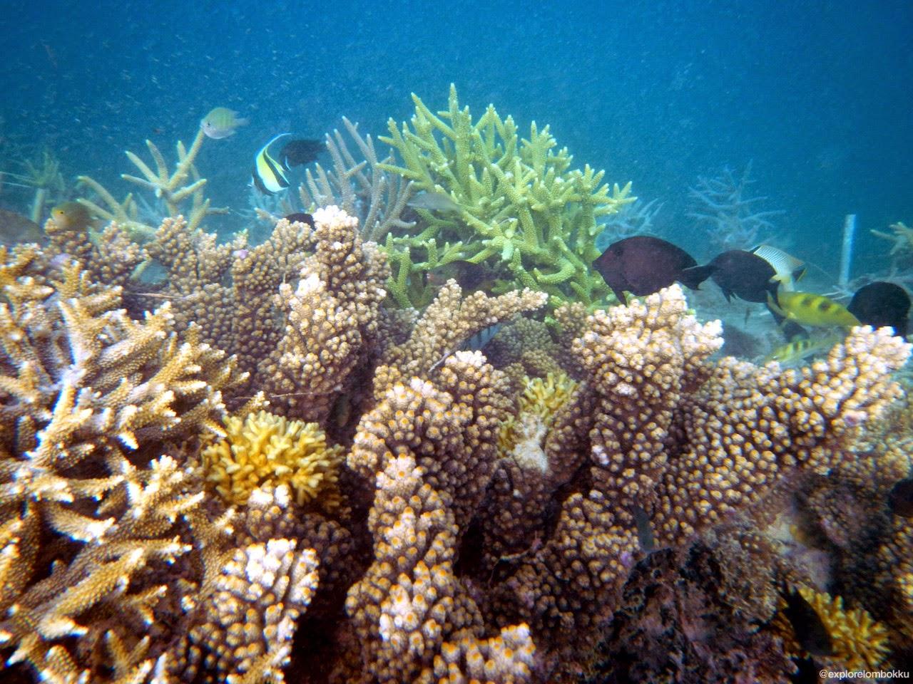 Snorkeling di Gili Kondo Lombok