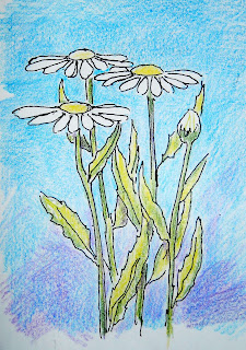 An illustration for the drawing lesson on how to draw daisies.
