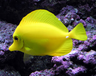 Coral reef fish 15