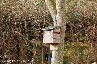 Caixa per a ratpenats als Aiguamolls de l'Empordà