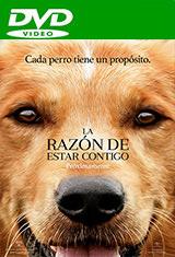 La razón de estar contigo (2017) DVDRip