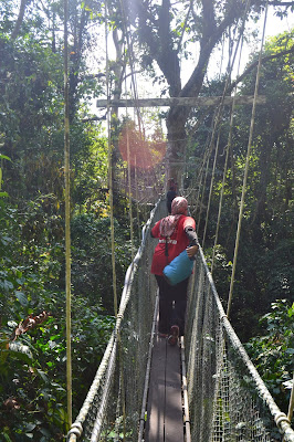 Canopy walk Mulu National Park