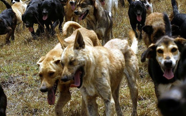 64-year old woman attacked by dogs in Berat died hours later