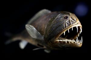 Самые необычные обитатели океана