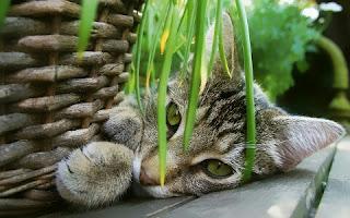 Cara Agar Kucing Tidak Kabur Dari Rumah