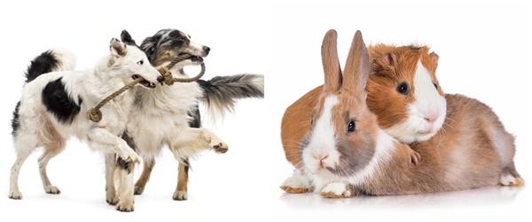 PLAC-market-place-mascotas-app