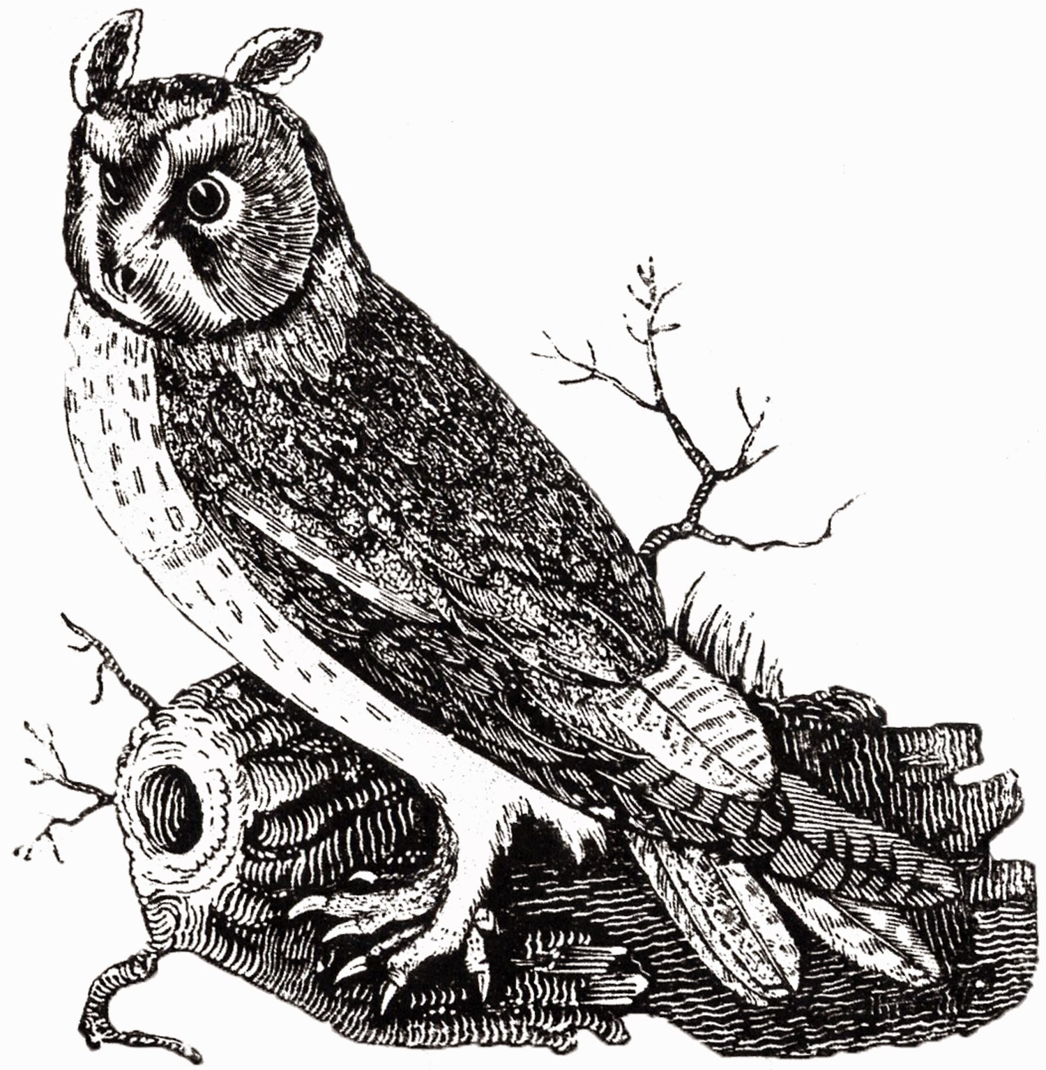 http://thegraphicsfairy.com/free-vintage-owl-image/