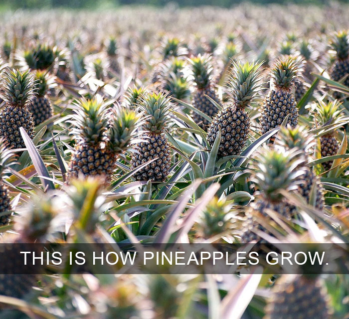 10+ Amazing Facts That Will Change The Way You See The World - Life Facts