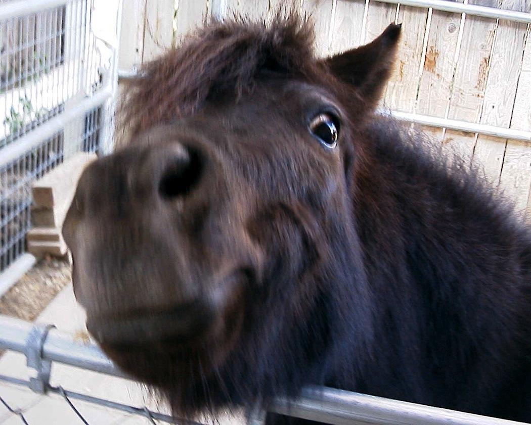 A Drifting Cowboy Cowboy Curiosity Little Horses Big