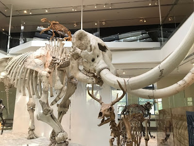 Mastodon at Los Angeles Natural History Museum