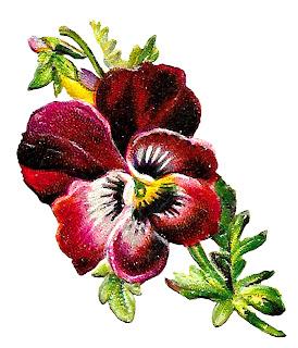 flower floral pansy illustration clipart download botanical art image