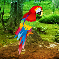 Games2Rule Scarlet Macaw Forest Escape Walkthrough