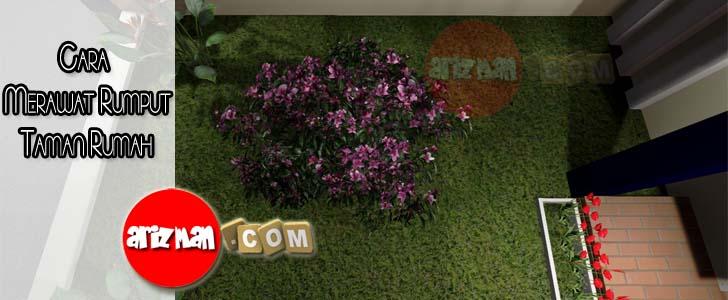 Cara Merawat Rumput Taman Rumah