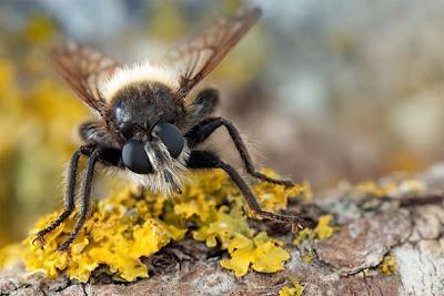 fotos de insectos a detalle.