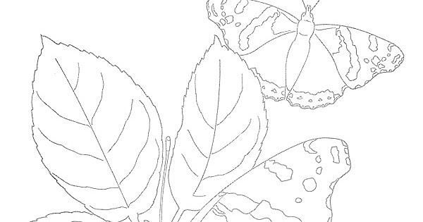 EXPOSE HOMELESSNESS: BUTTERFLY COLORING PAGE FOR OUR