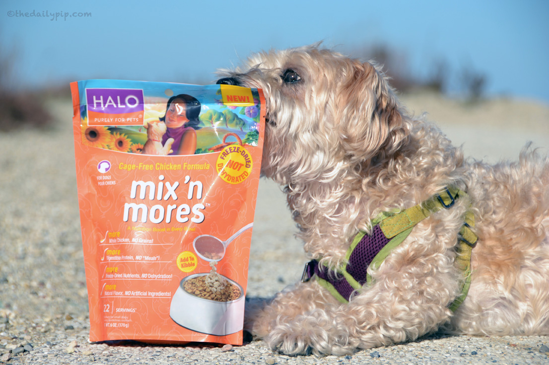 Ruby reviews Halo's mix 'n mores for the holidays, hounds, and hot buys giveaway