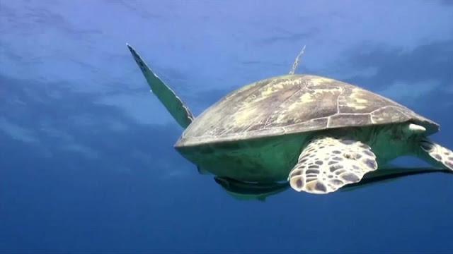 WWF: Μέσα σε 40 χρόνια χάσαμε το 60% του πληθυσμού των άγριων ζώων