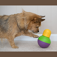 StarMark Bob-A-Lot Treat Dispensing Dog Toy Review