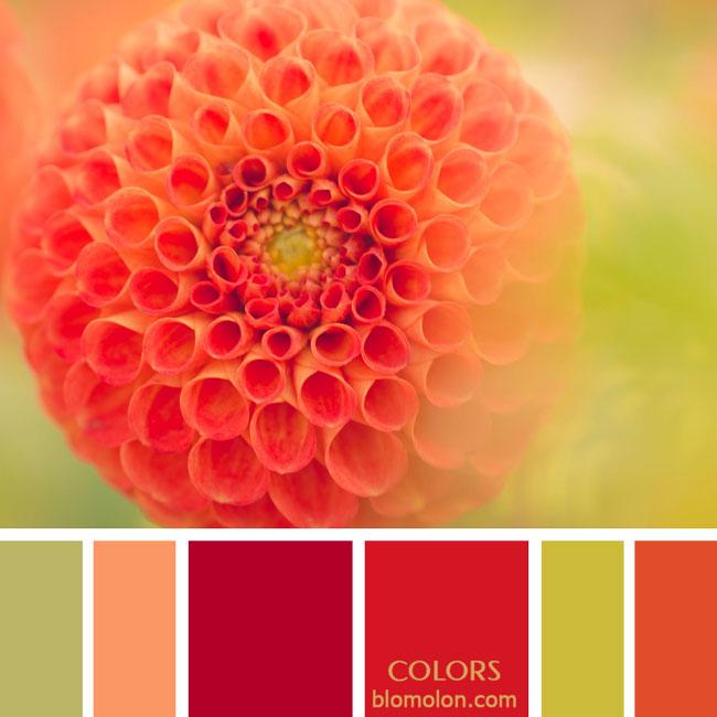 variedad_en_color_paletas_colores_3a