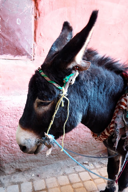 donkey in Marrakech Photo Diary