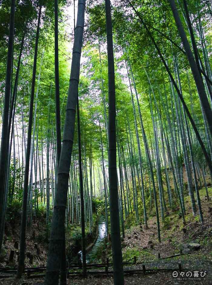 cours d'eau, bambouseraie d'Arashiyama, Kyoto