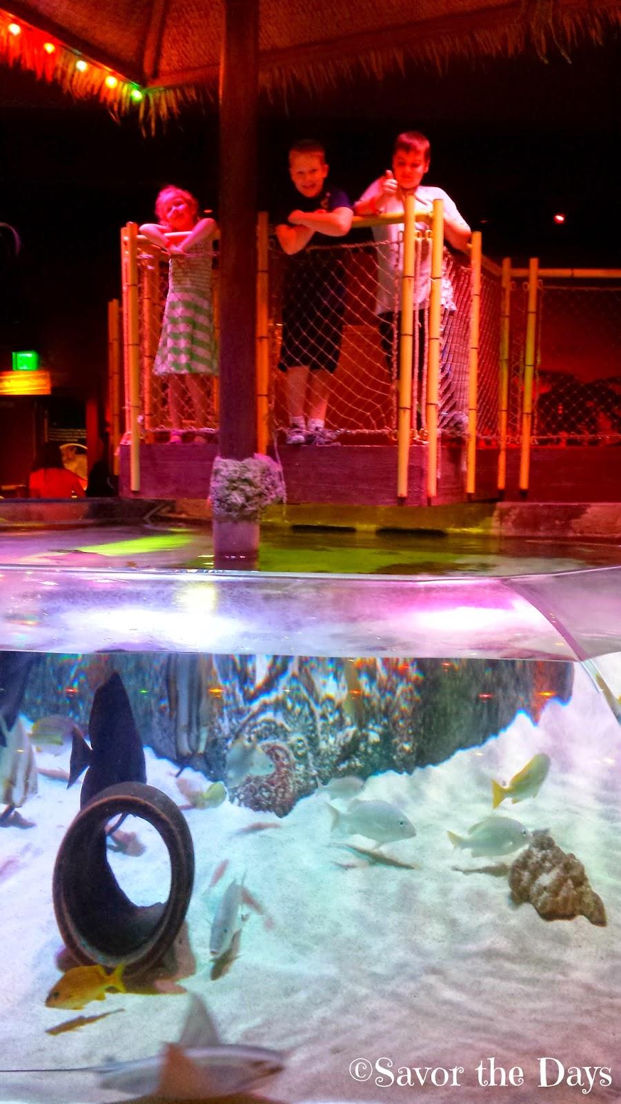 Savor The Days The Octonauts Are At Sea Life Aquarium