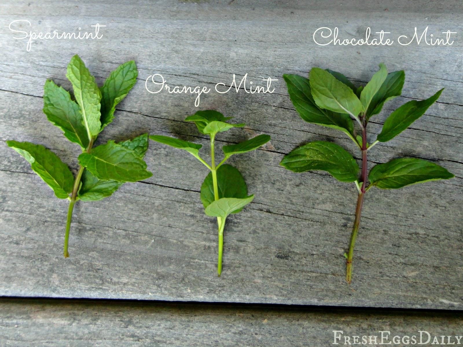 Identify Herbs By Leaf