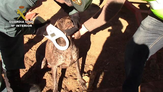 Imagenes de la operación Asensio Guardia Civil