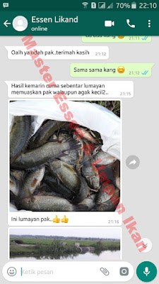 Essen Untuk Umpan Ikan Nila