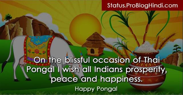 pongal status, happy pongal status, pongal status updates, pongal status sms, pongal status messages, pongal whatsapp status, pongal wishes status, pongal greeting card, pongal status images, pongal status photos